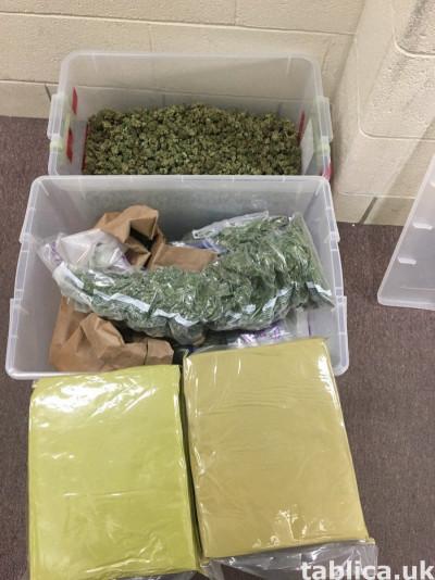 Tramadol..heroin..lsd. oxcodine.. ketamin liquid marijuana