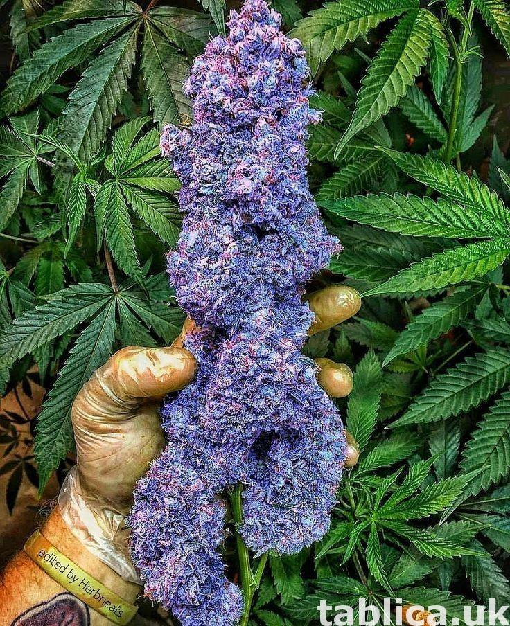 medyczny.. cocaine.. ketamin.. marijuana 3